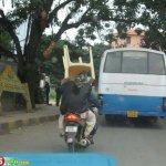 صور عجيبه من الهند8