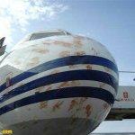 صور للطائرات تلطخت بدم الطيور1