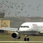 صور للطائرات تلطخت بدم الطيور3