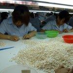 مزارع اللؤلؤ في اليابان3