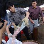 مزارع اللؤلؤ في اليابان8