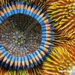 ابداع خيالي مع اقلام الرصاص9 Size:104.00 Kb Dim: 767 x 488