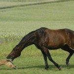 عندما يغضب الحصان3