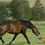 عندما يغضب الحصان4