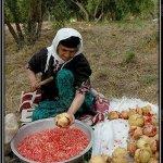 موسم قطف الرمان في ايران10