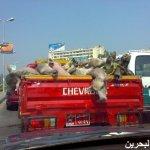 في مصر فقط15