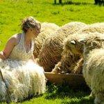 العروس تصنع فستان زفافها 2