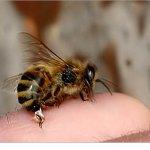 تعالوا شوفوا كيف النحلة تلسع 1