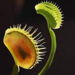 نباتات مرعبة .. تعيش على مص ا1