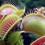 نباتات مرعبة .. تعيش على مص ا3