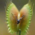 نباتات مرعبة .. تعيش على مص ا8