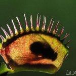 نباتات مرعبة .. تعيش على مص ا15