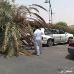 سقوط نخلة على سيارة في الرياض1