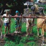 متحف الشمع في الهند1