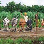 متحف الشمع في الهند2