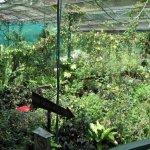 حديقة الفراشات Kuala Lumpur B8