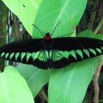 حديقة الفراشات Kuala Lumpur B10