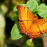 حديقة الفراشات Kuala Lumpur B11