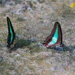 حديقة الفراشات Kuala Lumpur B12