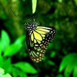رد: حديقة الفراشات Kuala Lump1