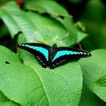 رد: حديقة الفراشات Kuala Lump2
