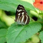 رد: حديقة الفراشات Kuala Lump3