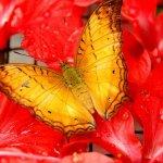 رد: حديقة الفراشات Kuala Lump4