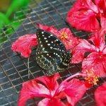 رد: حديقة الفراشات Kuala Lump5