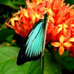 رد: حديقة الفراشات Kuala Lump6