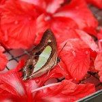 رد: حديقة الفراشات Kuala Lump7