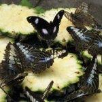 رد: حديقة الفراشات Kuala Lump8