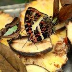 رد: حديقة الفراشات Kuala Lump9