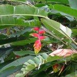 زهرة الببغاء 4
