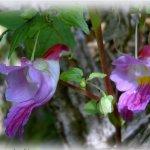 زهرة الببغاء 6