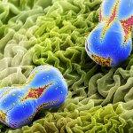 صور ميكروسكوبية مدهشة للعدو و4