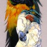 صور مرسومة على ريش الطيور 7