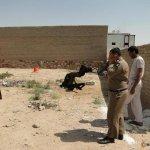 حادثة سقوط ناقة في احد حفر ال6