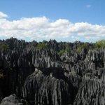غابة الأحجار في مدغشقر1