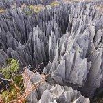 غابة الأحجار في مدغشقر2