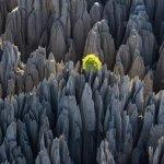 غابة الأحجار في مدغشقر3