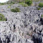 غابة الأحجار في مدغشقر4
