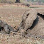 عملية إنقاذ درامية لفيلة و طف6