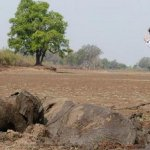 عملية إنقاذ درامية لفيلة و طف9