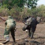 عملية إنقاذ درامية لفيلة و طف10