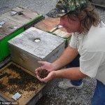عشرات الملايين من النحل بفلور1