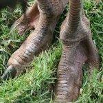 قبيله في أفريقيا يملكون أقدام7