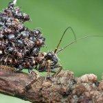 الحشرة السفاحة .. تحمل جثث ضح2