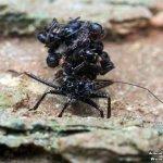 الحشرة السفاحة .. تحمل جثث ضح6