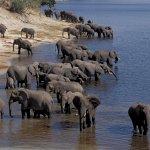 فيل elephant Size:367.20 Kb Dim: 1600 x 1049