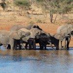 فيل elephant Size:401.00 Kb Dim: 1024 x 702